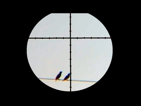 125 Yard Starling Shot with Air Rifle Laser Rangefinder Demonstration
