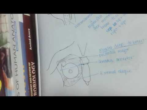 Xxx Mp4 Mammary Gland Anatomy 3gp Sex