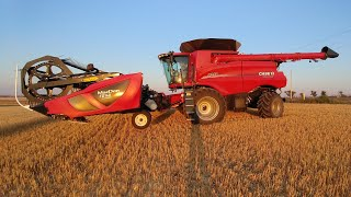🔴Live Special! CASE IH 8250 FULLY Automated Combine!