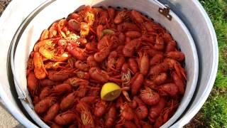 Boiled Crawfish 3-18-2012