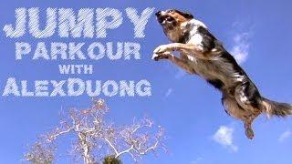 Alex & Jumpy - The Parkour Dog