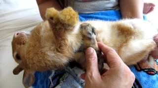 The Proper Way to Nurse Newborn Baby Rabbit Kits