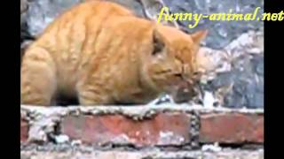 Yellow cat mating a small cat 老黄猫和小花猫交配