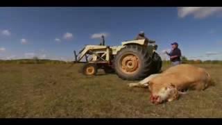 Monster Quest S03 E02 Cattle Killers