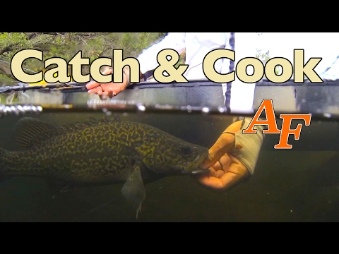 Catch n Cook Bass fishing EP.348