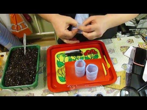 Как из подложки сделать стаканчики для рассады