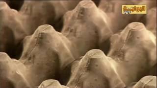 وثائقي كيفية صنع العجينة الورقية
