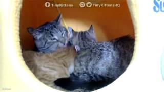 Grandpa Mason bathing kittens in a yellow submarine - TinyKittens.com