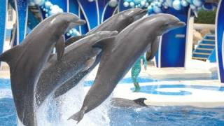 The Complete 2016 SeaWorld