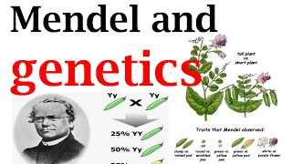 Mendel and genetics