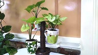 How to Recycle Old Ceramic Mugs Into Beautiful Tree Shaped Planters