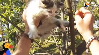 Kittens Meowing in Tree Rescued by Brave Biker | The Dodo