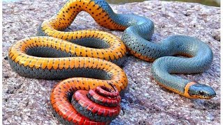 Top 10 Weirdest Snakes