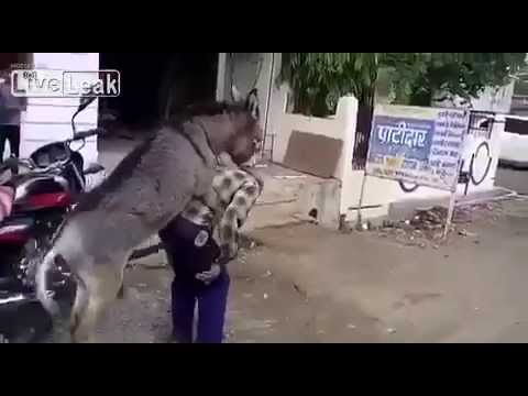 Horny Donkey Seeks Revenge On Owner By Mounting and Humping Him!!