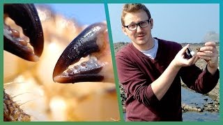 How To Film Like The BBC On Your Smartphone - Cheap Shot Challenge - BBC Earth Unplugged