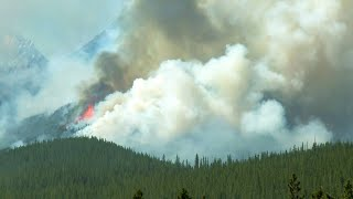 Why This Raging Forest Fire is Nothing to be Alarmed About