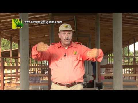 Tierra Pastos y Ganado Construcción de Establos2 Feb11 2012