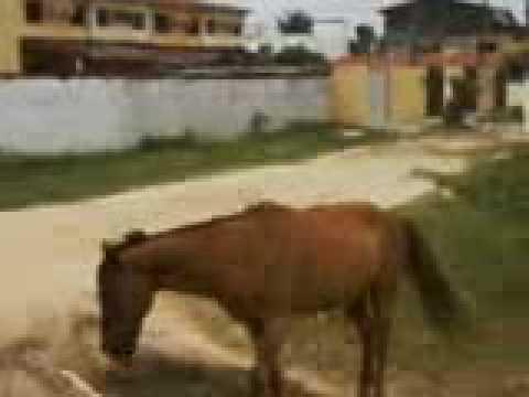 sexo dos cavalos ao vivo