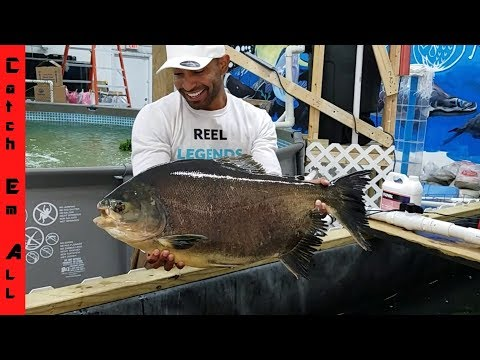 Xxx Mp4 World S Biggest Piranha Gets New Indoor Home 3gp Sex