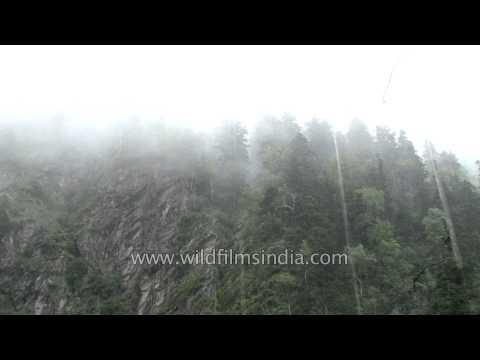 Lush green forest of Uttarakhand