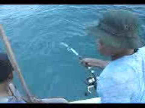 Mancing Ikan Gabus Laut Pantasik 25 kg.3gp