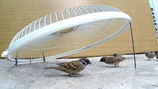 Awesome Foot Snare Bird Trap - The Best Bird Traps (That Work 100%) - How To Make A Bird Trap