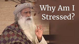 Why Am I Stressed? - Sadhguru on Stress