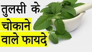 चमत्कारी तुलसी के  गुण और फ़ायदे │ Health Benefits of Tulsi (Indian Holy Basil) │ Life Care