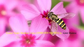 Tomar Name Modhur Gane (তোমার নামে মধুর গানে) by Amir Hamza