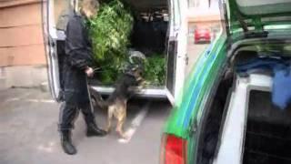 Mikrobusznyi marihuánát foglaltak le a rendőrök
