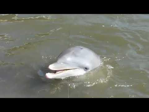 Xxx Mp4 Dolphin Rape The Young Girl 3gp Sex