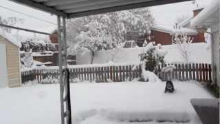 Snow Shayna