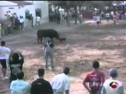 Cachorro bull terrier salva seu dono que estava sendo atacado por um touro
