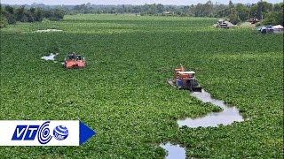 Lục bình 'hại chết' sông  Sài Gòn | VTC