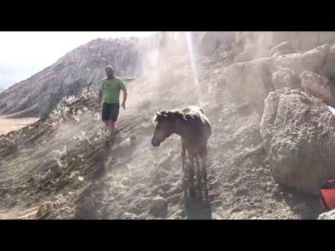 Xxx Mp4 Rescuing Horse Stuck Between Rocks ViralHog 3gp Sex