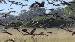Jo Blankenburg - Planet Earth Forever (BBC Planet Earth videoclip)