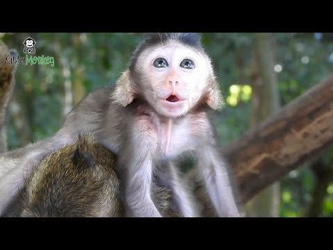 Xxx Mp4 Pity Baby Monkey Cry Call Mother Help Poor Baby Monkey Full Of Tear 3gp Sex