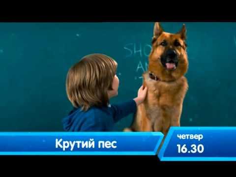 Крутой пес