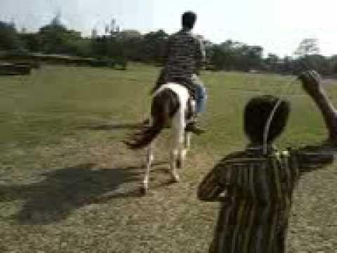Xxx Mp4 Horse 3gp 3gp Sex