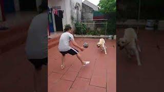 Doggie Goalie || ViralHog