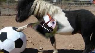 Dixie Klasson  -  Lilla Hästen Plopp