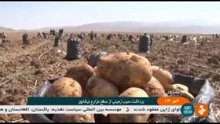 Iran Potato harvest, Sar-Velayat district, Neyshapour county برداشت سيب زميني بخش سرولايت نيشاپور