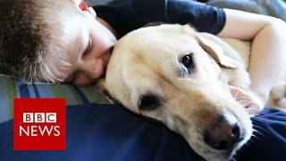 Autism dog Caddie makes Crufts finals - BBC News