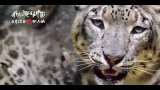 """[HD] """"Born in China"""" behind the scenes Making of Snow Leopard"""
