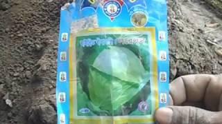 গ্রামের  শাক খেত তৈরি করে কি ভাবে দেখুন।!!!Vegetable Ranu Plantation Take Care