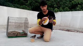 How to love baby bird shalik part 2 -  শালিক পাখি