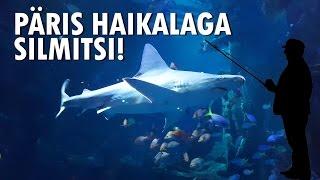 Vlog 19 - Nägin päris haid