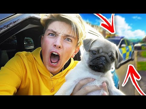 Xxx Mp4 I Took My DOG Out In NEW CAR And THIS HAPPENED 3gp Sex