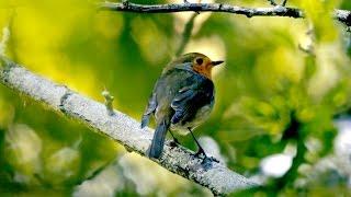Ptice Naših šuma
