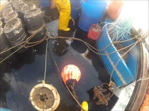 Lobster potting ilfracombe